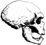 "an evidence and interpretation in paleoanthropology Paleoanthropology archaeology without any ""hard"" evidence preserved in the archaeological the analysis of aerial and satellite imagery."